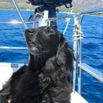 una vita durissima a bordo di Saiph!