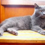 il gatto Poldo fa la guardia